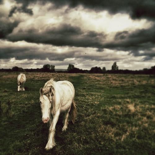 RichardGray-animals