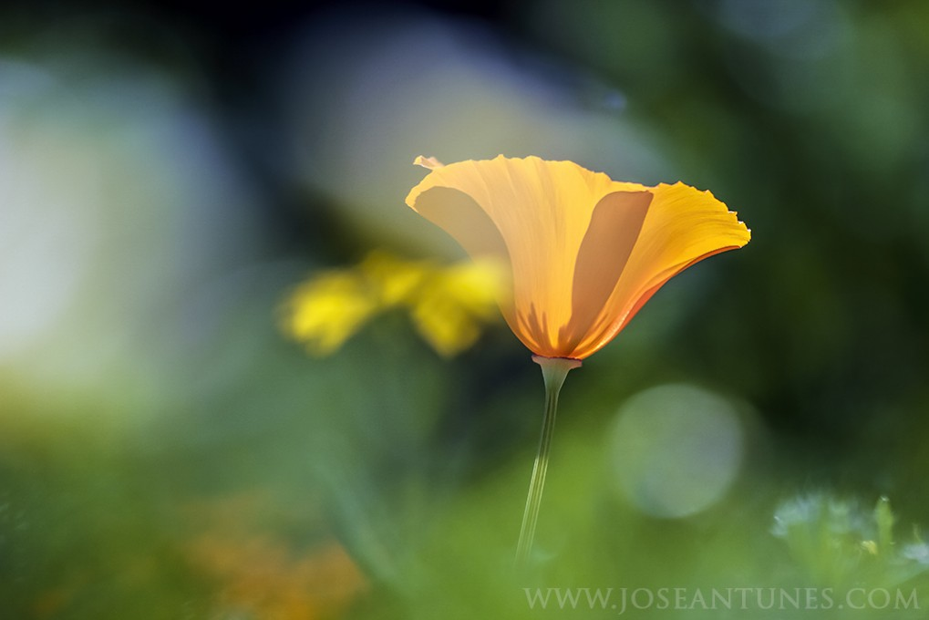 MSOX_myownflowers02_JA