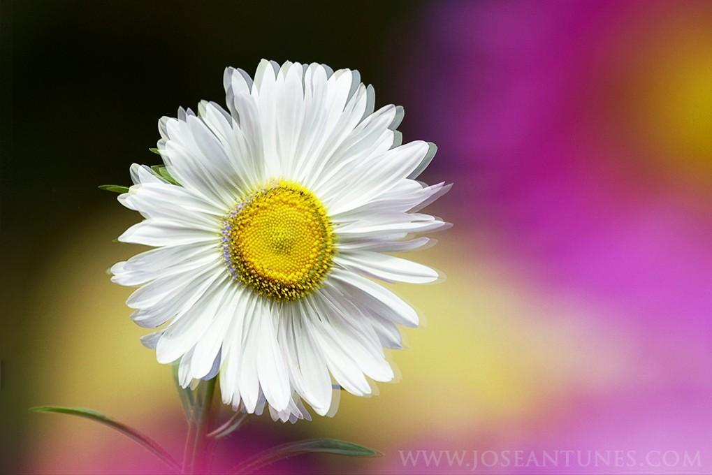 MSOX_myownflowers06_JA