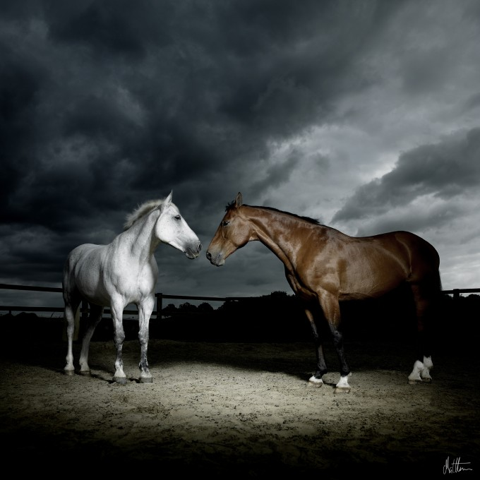 One of Seed's majestic shots of horses.