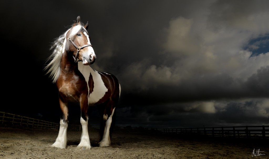 An example of the dramatic lighting Seed uses to capture horses.