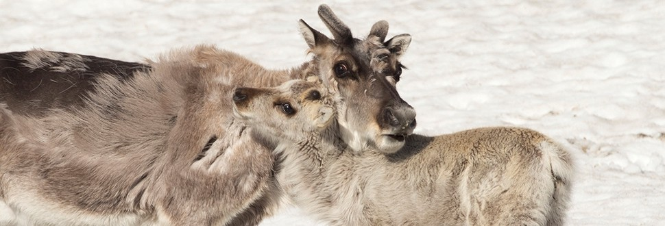Nature Photography: Svalbard – Norway