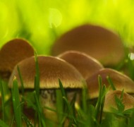 Jose Antunes: How to photograph mushrooms with flash