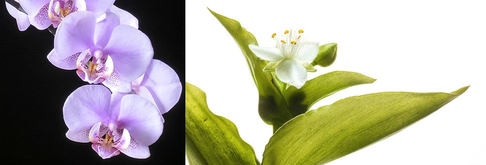 5 different situations in flower photography