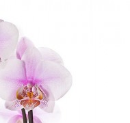 José Antunes: How did you shoot that – The intimacy of orchids