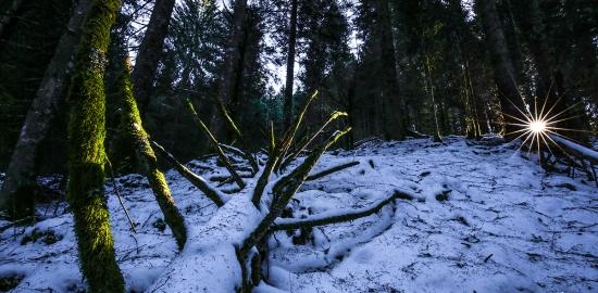 Bosco del Cansiglio, Veneto, con il diaframma tutto chiuso ad ottenere la stellina sul sole, nelle azzurre ombre del bosco innevato