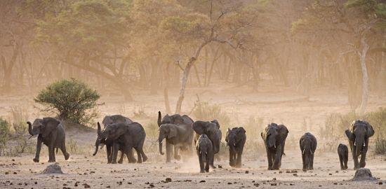 Elephants Featured