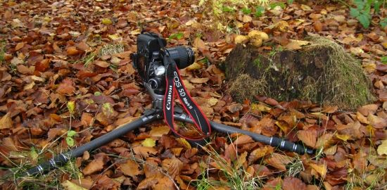 Tripod Flat to the ground photographing fungi