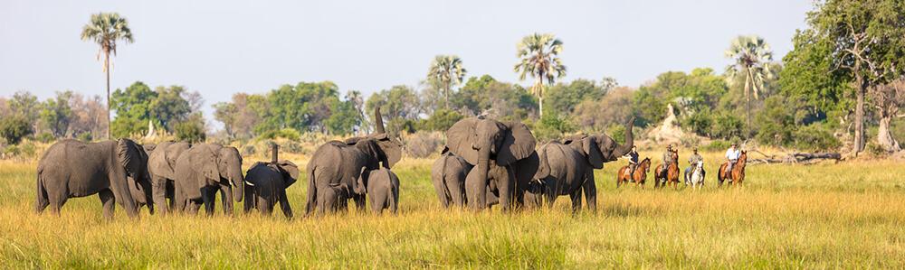 Okavango Delta. Botswana